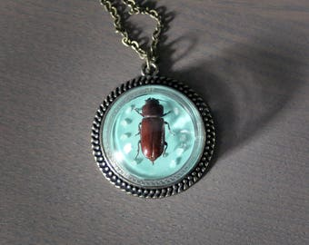 Pole Borer Beetle Glass Globe Pendant Necklace