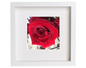 Crimson Velvet Rose