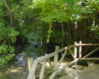 A Forest Stream