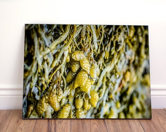 Rockweed algae wall art canvas
