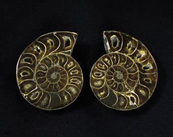 A set of polished AMMONITE halves from Madagascar - Fossil