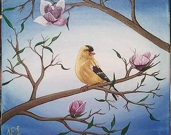Gold finch in a Magnolia Tree
