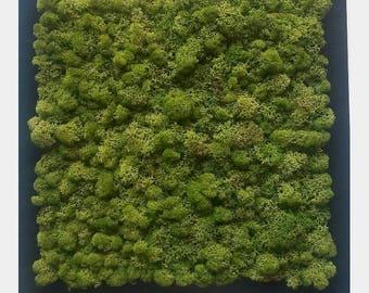 Moss Wall Art | 50x50 cm | Moss Frame | Real Preserved Moss | Live Moss | Home Decor | Vertical Garden