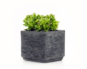 Black pot plant