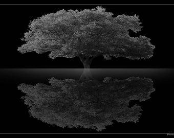 Fine art photography - tree reflections: 30 x 20 cm