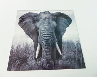 square black and white elephant card