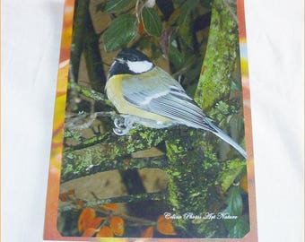 "Greeting card ""a little chickadee in autumn...  ""from Celine Art Nature Photos"