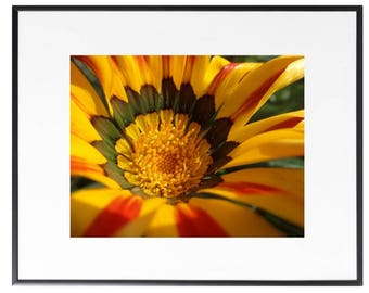 Flower digital photo, flower photo print, yellow flower photo, living room decor, instant download, flower print, gifts for her, gifts