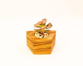 Bali wood Succulent Planter  -  Geometric Collection