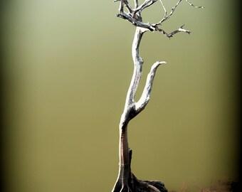 Little Tree, Nature Photography, Wall Art, Green