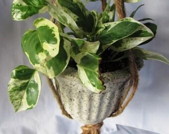 Rare Pothos/ Hanging Pot / Macrame