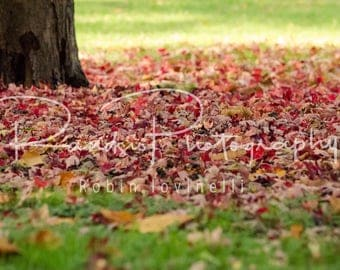 Crunchy Red Autumn Leaves Digital Downloadable Image