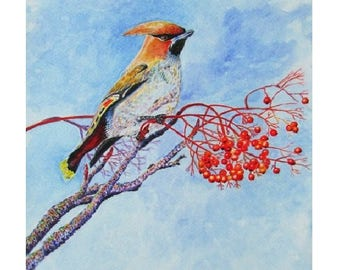 A4 Giclée Print entitled 'Waxwing' from an original watercolour painting by artist Martin Romanovsky