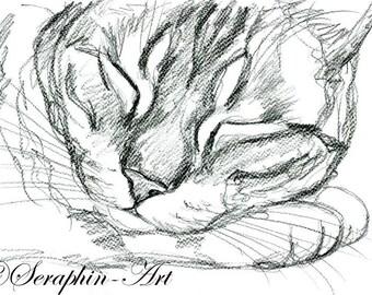 Sleeping Kitten Original Pencil Drawing