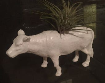 Cow Window Planter + Air Plant