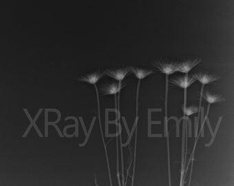 Flower X-Ray Wall Decor