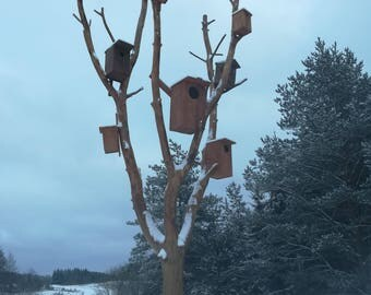 Birds hause, winter, nature, snow, trees, instant download, printable, download file