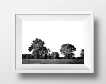 Black and White Trees Print, Trees Photo, Trees Print, Nature Wall Art, Digital Download, Modern Photography, Printable Poster, Wall Decor