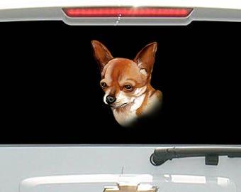 Chihuahua Dog Staring at you
