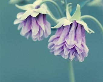 Flower Photography, Columbine Flower Print, Large Wall Art Print, Floral Art, Garden Wall Art, Fine Art Photography Print