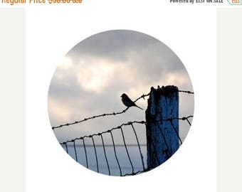 50% OFF SALE Bird Photograph, Bird Home Decor, Blue, Grey, Black, Bird on a Wire, Fence, Country Decor, Circle, Round Image 8x8 inch Print -
