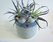 Yarn bowl, Knitting yarn holder, dusty blue yarn bowl, succulent planter, Ceramic yarn bowl, ceramic bird planter