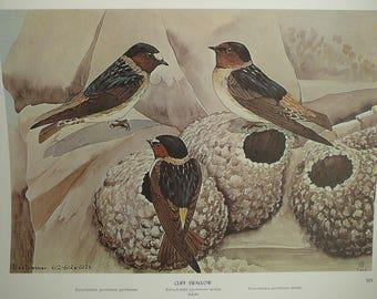 Vintage Bird Prints Set Folio Rex Brasher's Song Birds