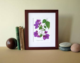 "Pressed flowers art print, 8""x 10"" matted, Bougainvillea flowers, floral art print, botanical print, colorful flower art, no. 089"
