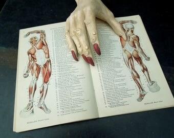 Medical Book Atlas of Human Anatomy - Illustrations Skeleton Human Body  - Gift for Med Student Teacher Vintage Old Medical book