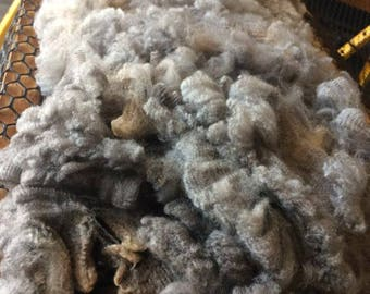 Raw Wool Lamb Fleece, Topaz