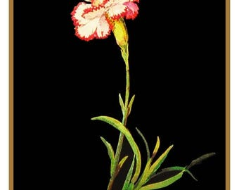 GREAT SALE Mary Delany's Pink Dianthus Carnation Flowers * from Paper Mosaics* Counted Cross Stitch Chart / Pattern