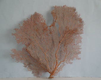 "14.2"" x 13"" Natural Red Color Sea Fan Seashells Reef Coral"