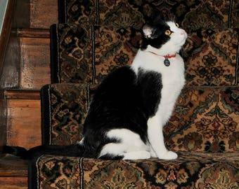 Cat photograph, home decor, wall decor, cottage decor, cat decor, cat still life, Tonto On Victorian stairs. Cat Fine Art
