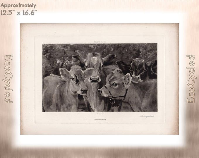 Thoroughbreds by Thomas Allen Antique Photogravure Print Goupil Vintage Paper Ephemera cows cattle zyxG28