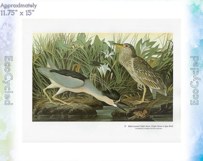 Audubon Herons 1 Birds of America Vintage Art Print Nature Vintage Paper Ephemera John James Audubon Baby Elephant Folio ready to frame 37