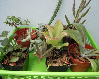 Assorted Plants Cactus Succulents Container Gardening Houseplants Ships Free