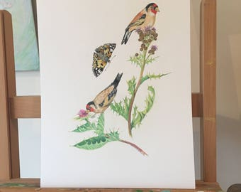 ORIGINAL DRAWING Goldfinches, Carduelis carduelis, eating seeds of a carduus. Nearby a Vanessa cardui. Host-plant and host-butterfly.