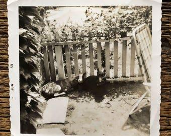Original Vintage Photograph | Dog Day Afternoon