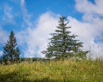 Grassy field trees clouds - Digital Photography Backdrop - Composite Background - digital download