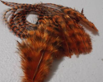 Craft Feathers Orange Grizzly Craft Feathers 2-5 inches qty 12