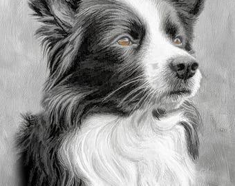 border collie dog print, dog art, dog lover gift, dog picture, dog wall art, dog photography, animal print, animal art, home décor art