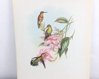 SUMMER SALE Vintage Fine Art Full Color Bird Bookplate