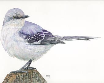 "Northern Mockingbird Print 5x7 of watercolor painting 5"" by 7"""