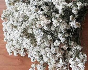 Everlastings, Pearly everlastings, dried everlastings, white everlastings, White dried flowers