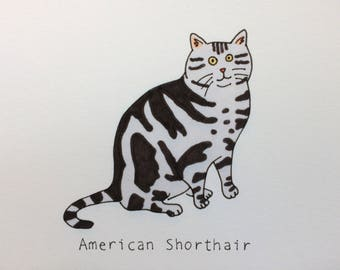 "American Shorthair Cat - 8""x10"" Art Print"