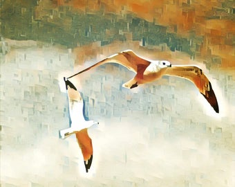 Decorative wall art photo 8x10 original artwork seagulls birds nautical abstract