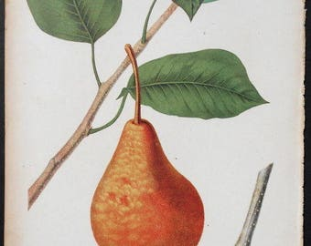 "1852: Buerre Bosc Pear. Antique Lithograph Print by Charles Hovey, American Pomologist  and Founder of ""The American Gardener"""