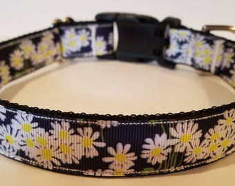 Daisies dog collar