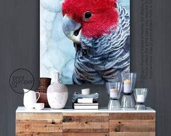 RED GANG COCKATOO - Art Print Poster Canvas - On Trend