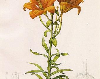Flower Print Day Lillies - art print - gift for artists - art lovers -- Spring Bouquet - flower print decor oranges